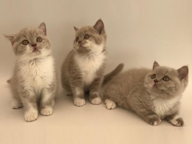 Naše koťátka